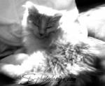 Garfield – mit dem Handy fotografiert