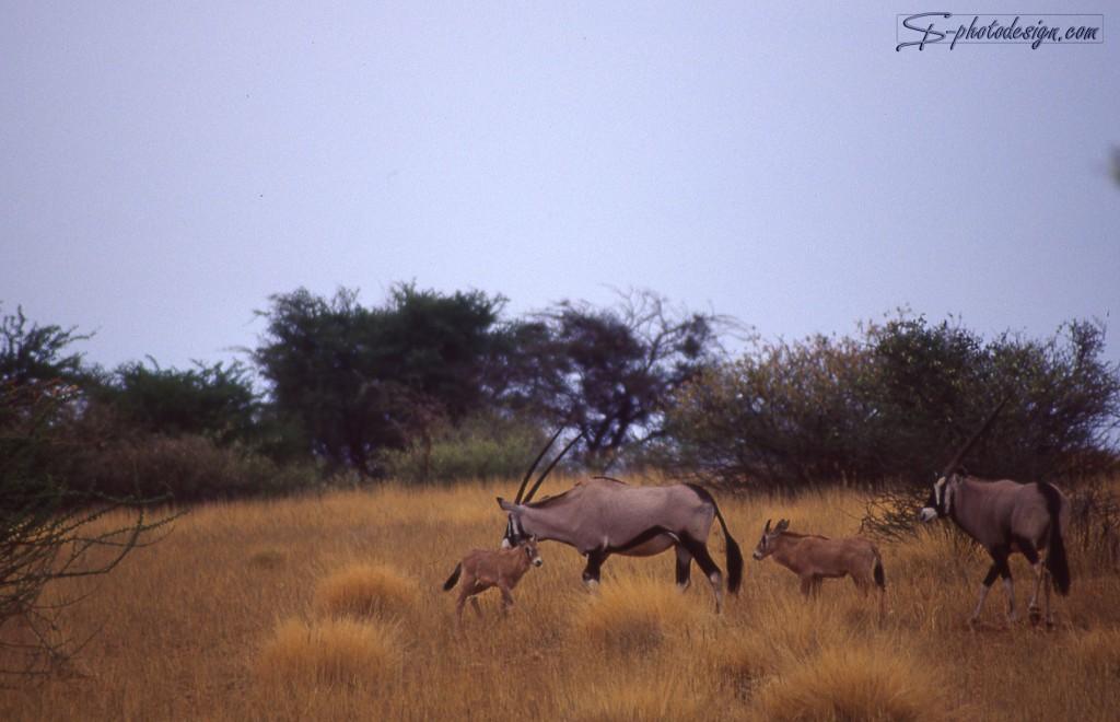 Das Original: der Horizont (Graslinie) ist schief. Die Tiere - das Hauptmotiv - stehen irgendwo am Rand.