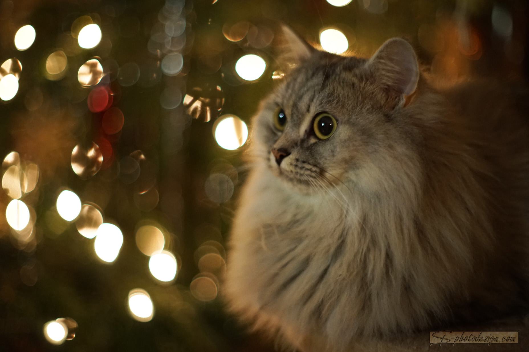 Nala_Weihnachten