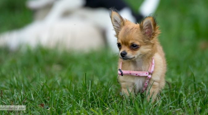 Tierportrait: Hundewelpen beim Spielen
