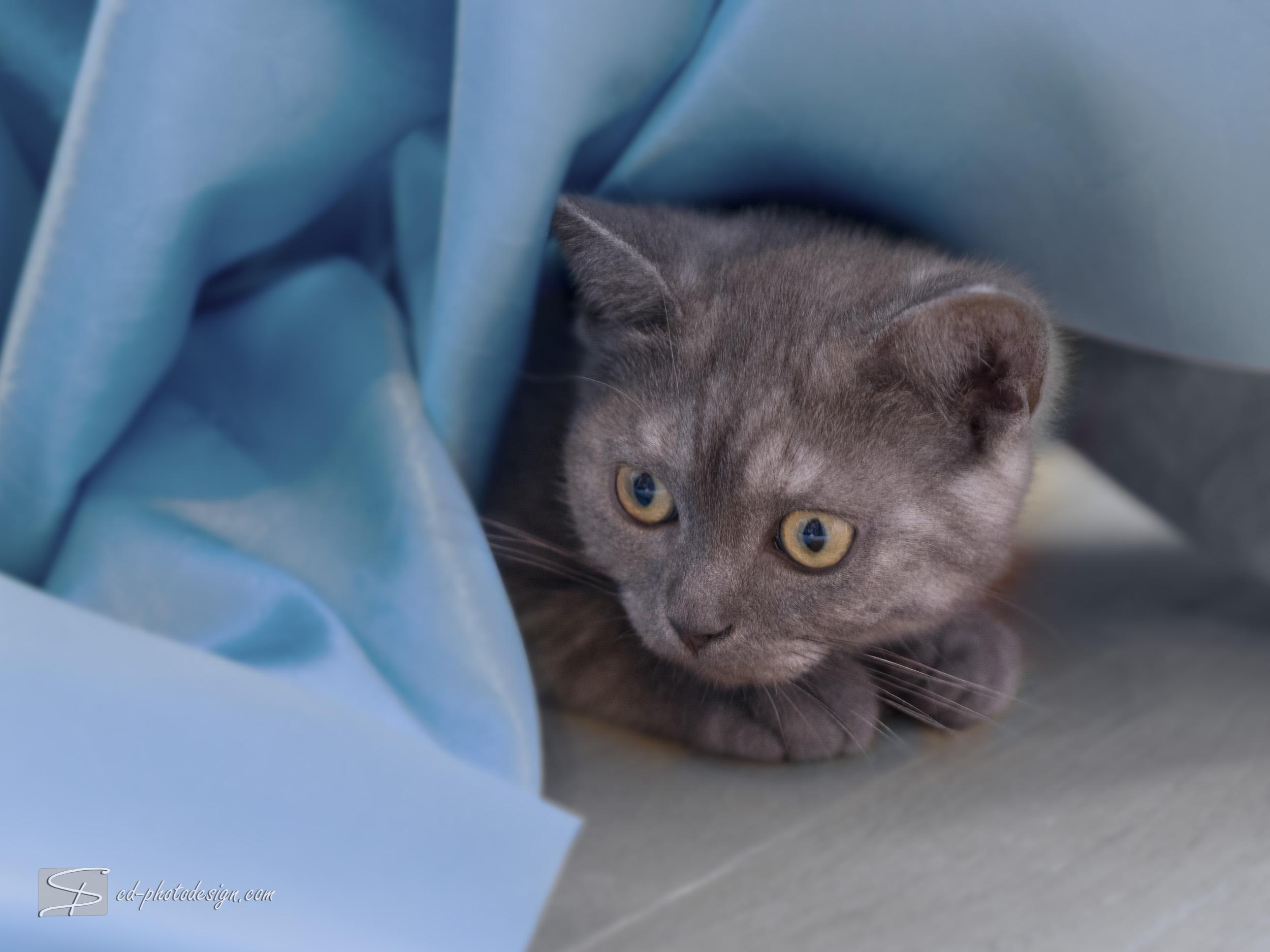 Wieder mal Katzen… unwiderstehlich!