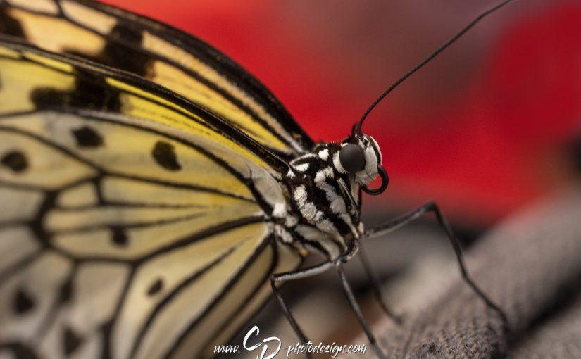 Tierfotografie – Schmetterlinge im Portraitmodus